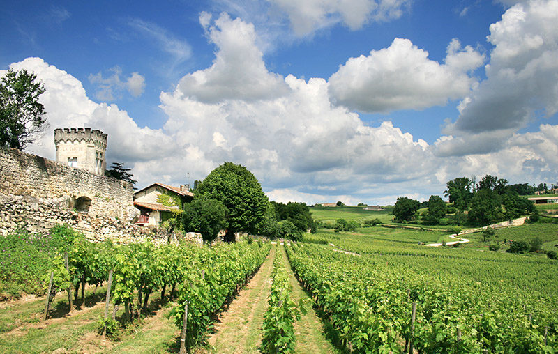 The Bordeaux vineyard