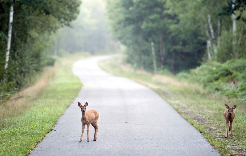 Greenway – bike path